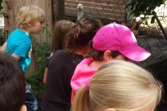Hühner beobachten