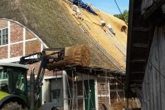 Das Dach wird mit frischem Reet gedeckt.