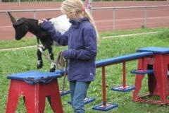 Probe der Ziegenakrobatik